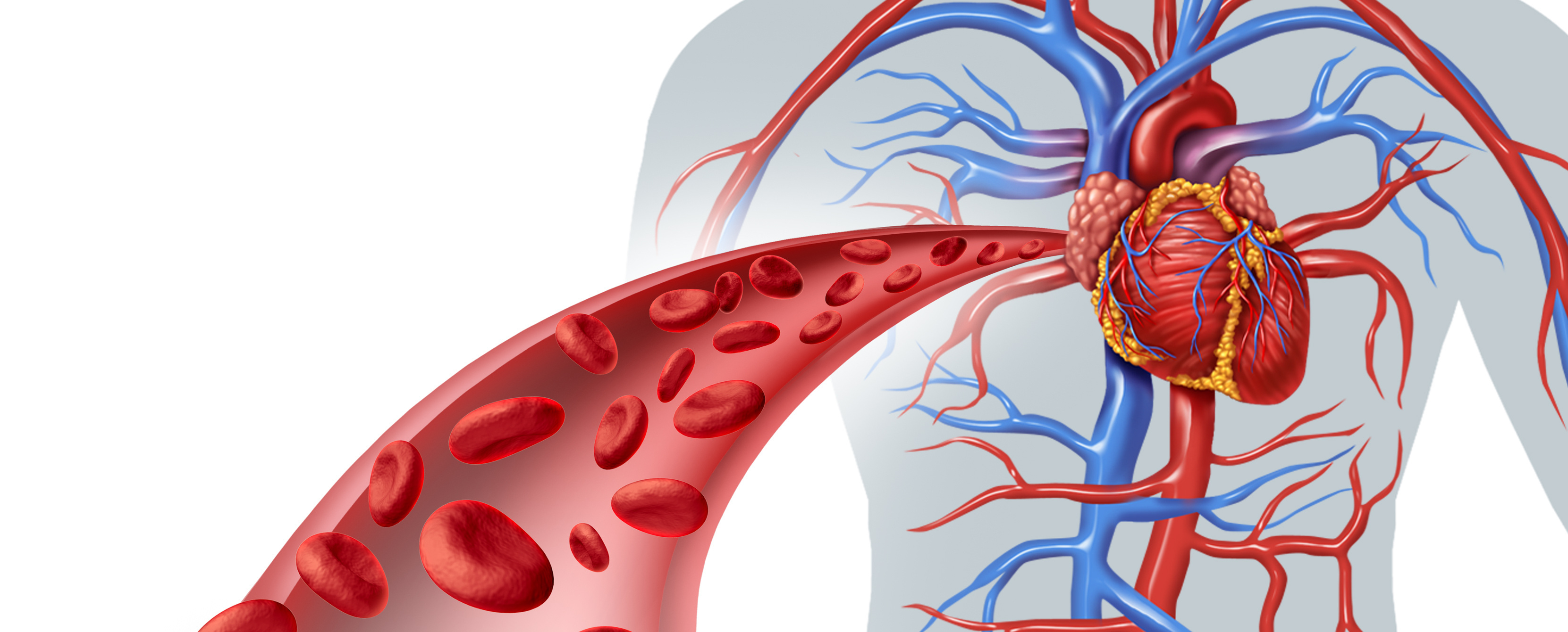 How Parallel Circuits Work in the Body: The Cardiovascular System Requires Low Resistance